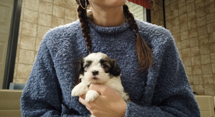 first time puppy owner
